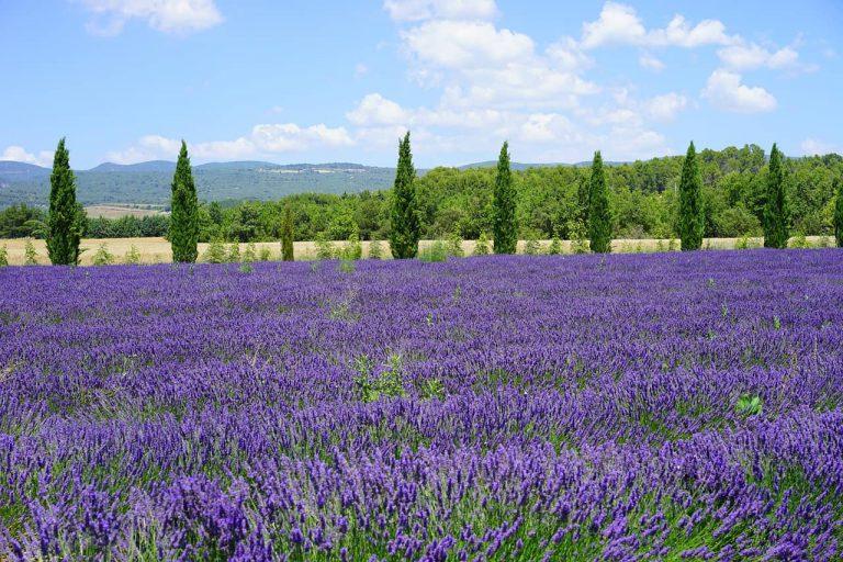 Fietsvakantie Provence 1 768x512